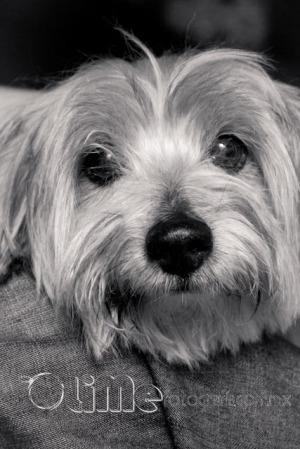 Foto blanco y negro de mascotas. Simba.